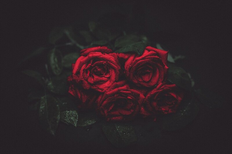 Image of red roses