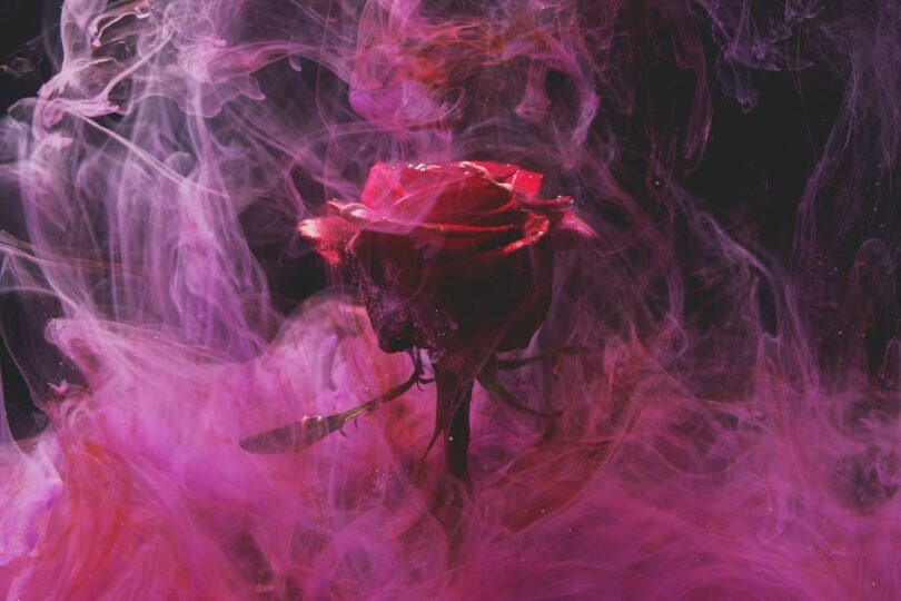 Image of a rose that is symbolic of the karmic relationship