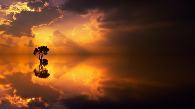 Image of a solitary tree standing within the ocean symbolic of deep listening