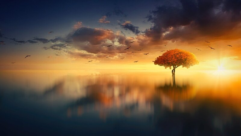 Image of a dream-like landscape with a tree in the middle of the ocean