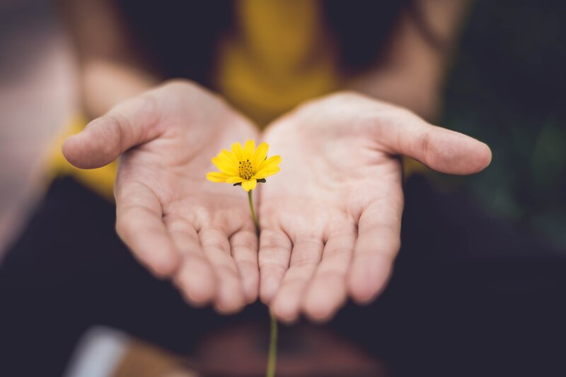 Image of a woman holding a yellow daisy