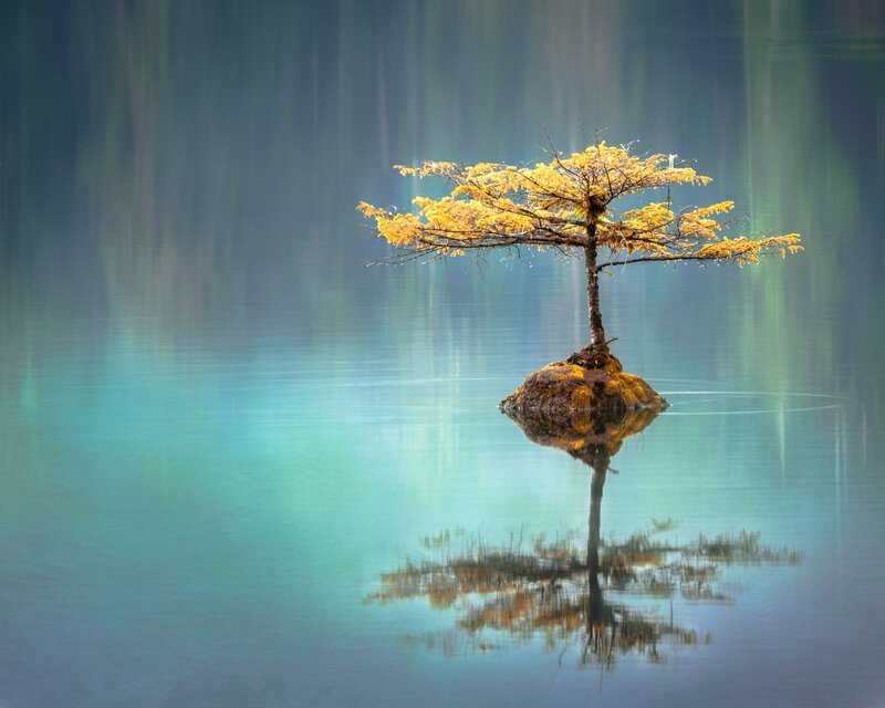 Image of a zen tree in crystal clear water