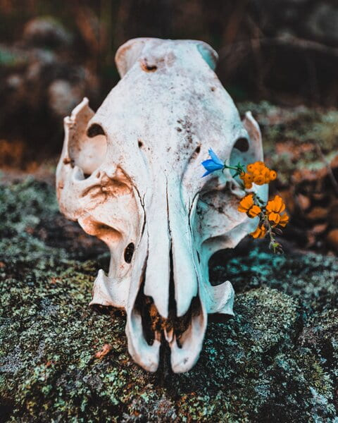 Image of a skull and flowers