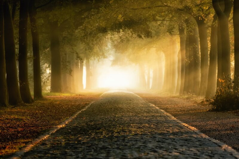 Image of a magical looking forest with a road leading ahead
