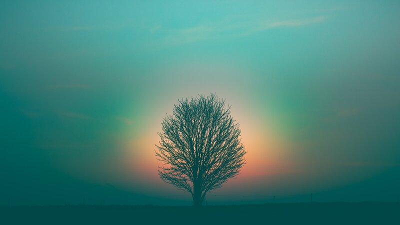 Image of a mystical tree in a misty landscape